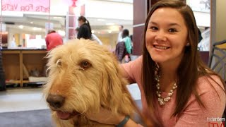 The Scarlet Scoop: Puppy love hits campus with Smooch-A-Pooch kissing booth