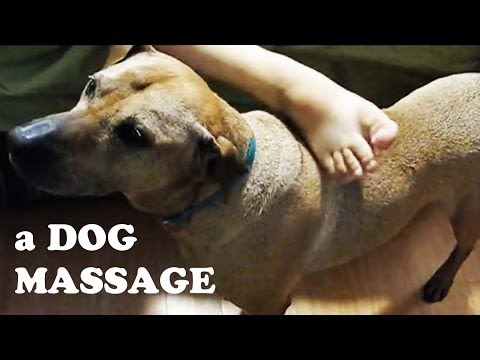 Dog Home Spa Massage - Body Itching Rubbing Scratching - Very Funny Dogs Videos DogsCircle Jazevox