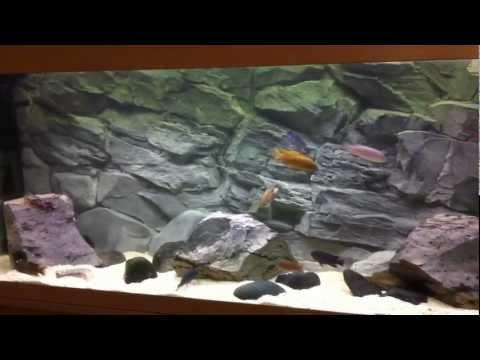 Diy aquarium background doovi for 3d fish tank