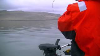Largest Walleye Caught on Film Unofficially