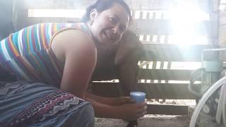 Jak dojím kozu