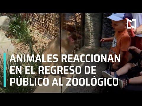 Reacción de los animales en la reapertura del Zoológico de Chapultepec - En Punto