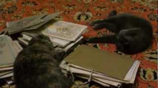 кошки и картины