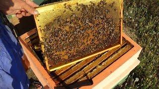 видео Медоносная база пчеловодства