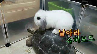 토끼와 육지거북이가 노는법❤(rabbit and tor…