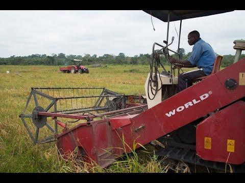 Better Seeds Bring Bigger Harvests in West Africa
