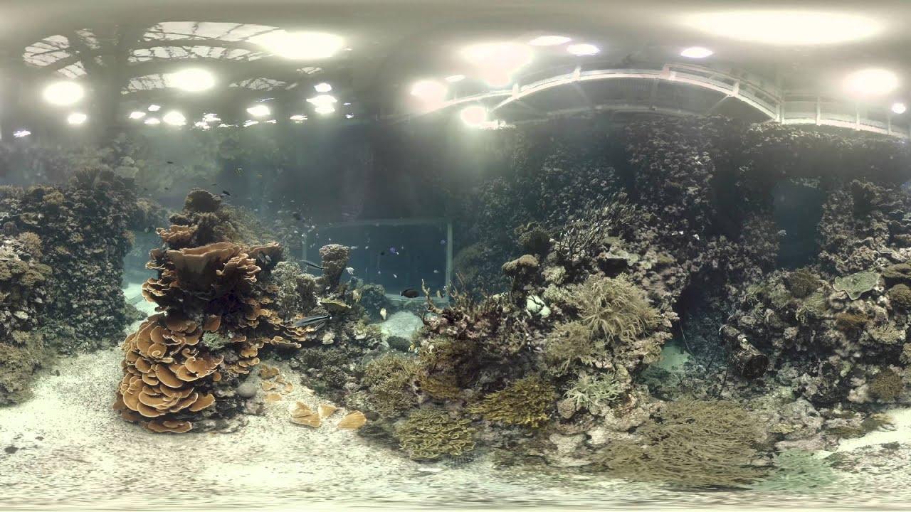 Zwem zelf in de Ocean (360-gradenvideo)