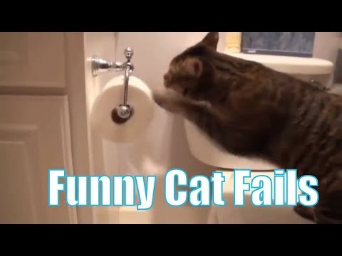 Stupid Funny CAT FAILS [Youtube Video Compilation 2018] - Stupid CATS