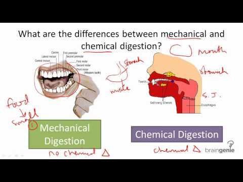 8.5.3 Mechanical v Chemical Digestion