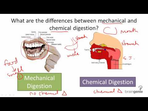 8.5.3 mechanical v chemical digestion download english subtitles, Cephalic vein