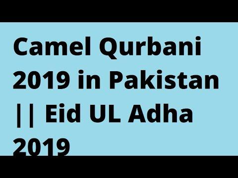 Camel Qurbani 2019 In Pakistan    Eid UL Adha 2019
