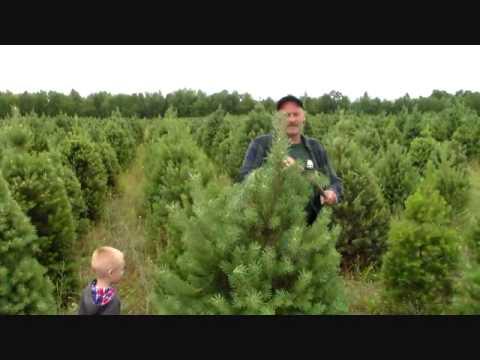 Kp Tree Nursery You