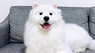 [ENG Sub] dog who wanted to be a cat
