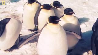 видео О животных антарктиды
