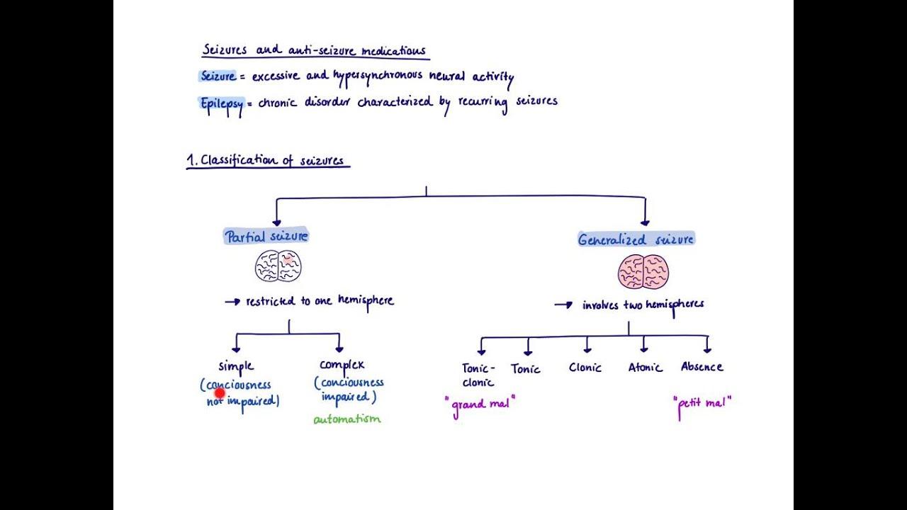 brandls basics seizures and antiseizure medications 13