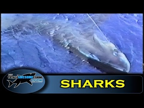 Thresher Sharks - How to catch them - The Totally Awesome Fishing Show