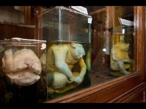 Самые страшные музеи мира