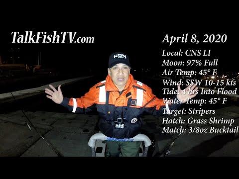 1st Striper Of 2020 - Central North Shore LI - April 8 - TalkFishTV.com