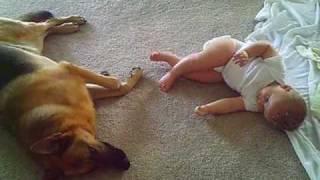 German Shepherd With Baby (in Loving Memory 9/19/03 - 9/23/08)
