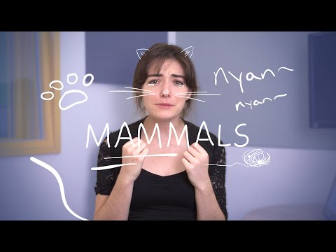 weekly-french-words-with-lya---mammals