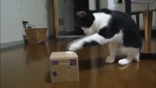 Новинки смешные приколы с котами 2015