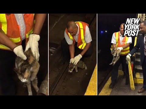 Cat trapped under the tracks is rescued by a subway worker | New York Post