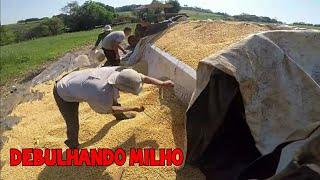 batendo milho