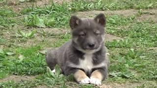 Ответы про собак. 07.05.2019