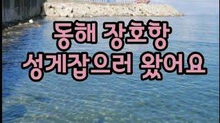 성게잡으러 가볼까요?#장호항#윈드서핑#성게#우니#제철성…