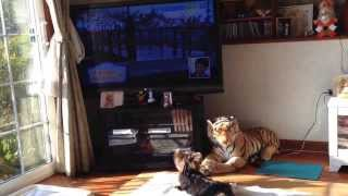 フナッシーが登場、テレビの前にやって来て、、、、。