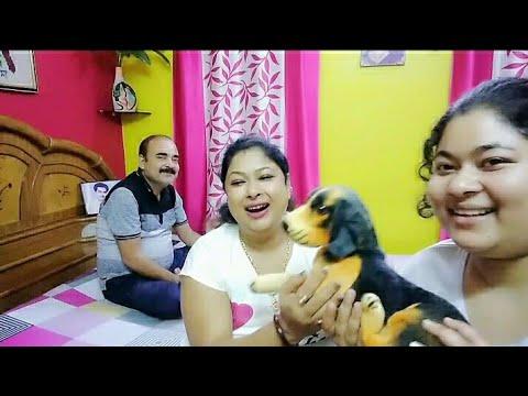 দেখুন, কাকে নিয়ে এলাম বাড়ীতে❓ Bengali Vlog