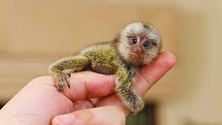 Самые маленькие животные в мире. Аномально маленькие животные [Удивительный мир#65]