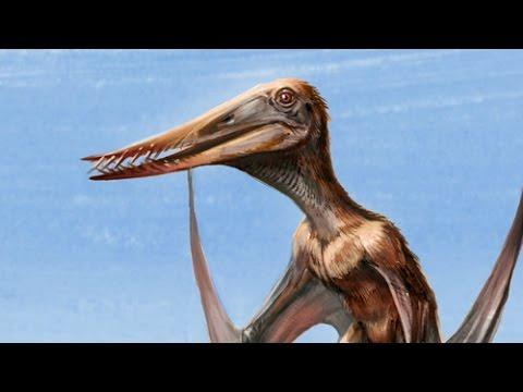 New Jurassic Pterosaur Named