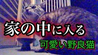 野良猫 #キジトラ #Straycat #幼い野良猫 #幼いキジトラ猫 #野良猫の餌 いつもご視聴ありがとうございます   猫好きさん、動物好きさん、その他さ...
