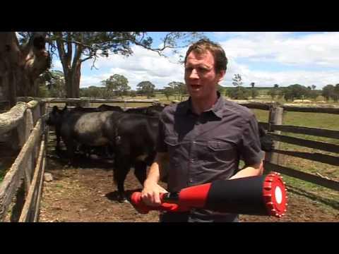 Cattle Pregnancy Testing Portable Pregnancy Scanner Youtube