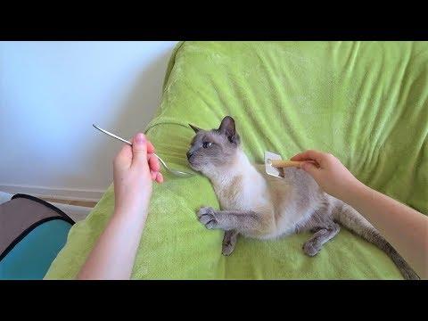 Anleitung: Wie man eine schwierige/sensible Katze an das Bürsten gewöhnt (ohne Stress/Festhalten)