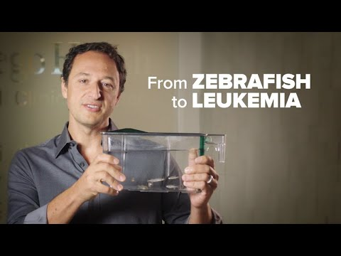 From Zebrafish to Leukemia Cure