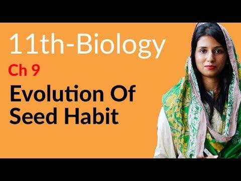 1st Year Biology Evolution of Seed Habit -Biology Chapter 9 Kingdom Plantae-FSC part 1