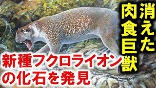オーストラリアの消えた肉食獣、新種フクロライオンの化石を発見