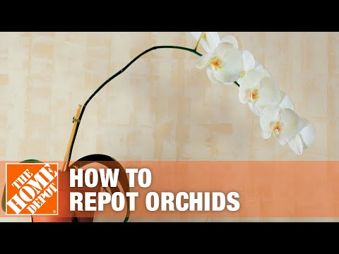 How to Repot Orchids - The Home Depot