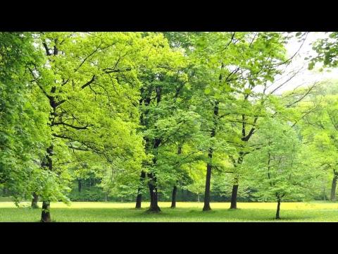 Hermosas melodías instrumentales para orar, Música para orar