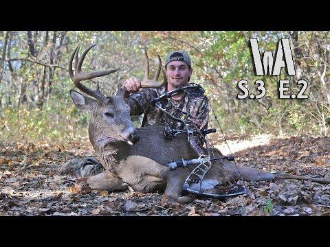 Big Buck Rattled In - Stud Kanas Buck (Bowhunting Kansas Whitetails)