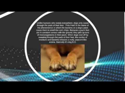 Veterinarians in San Jose Share Dog Facts