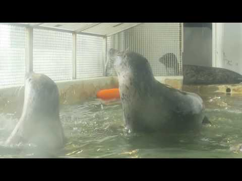 Seal Feeding At Aquarium, Seaside, Oregon