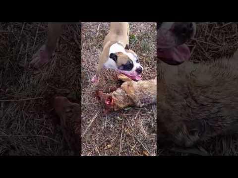 Family dog kills coyote on Thanksgiving