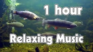 1 hour of relaxing music meditation   sleep   spa   study