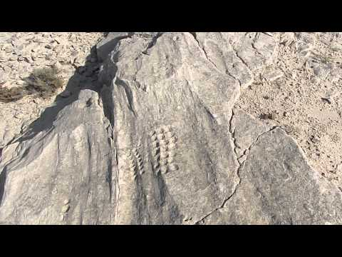 Incredible Al Jassasiya Rock Art Carvings #Qatar