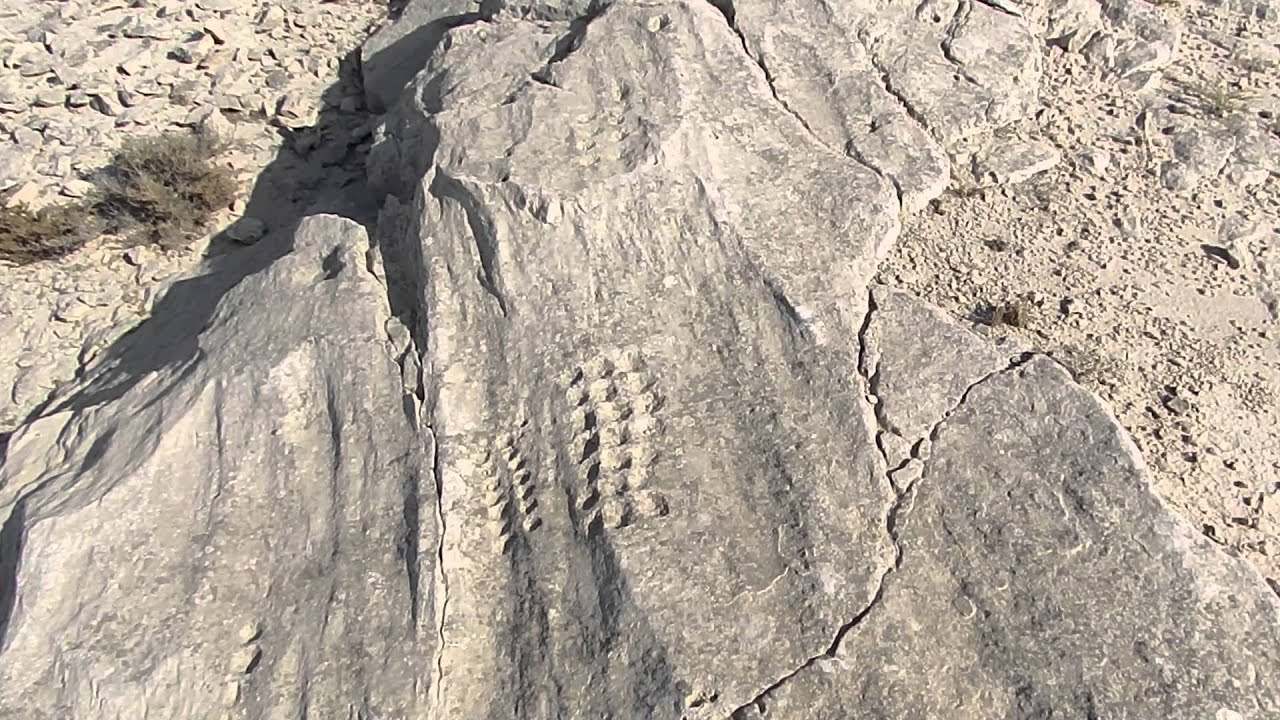 Incredible al jassasiya rock art carvings qatar youtube