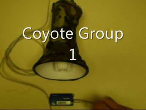 Coyote Hunting - Digital Predator Call mp3