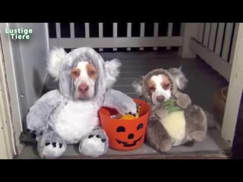 Lucky Chihuahua Spielt Witziger Hund Lustige Tiere Fur Kinder